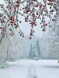 inverno-neve1